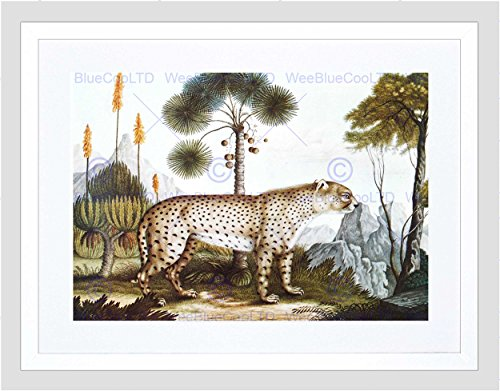 Black Cheetah (PAINTING ANTIQUE NATURE ZOTL CHEETAH GEPARD BLACK FRAMED ART PRINT B12X12835)