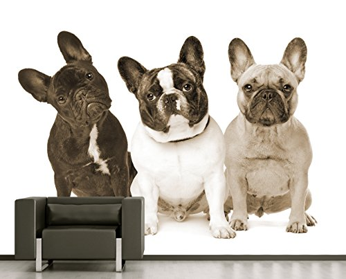 "Price comparison product image Bilderdepot24 self-adhesive Photo Wallpaper - Wall Mural ""Three French Bulldogs - sepia"" 141.73 inch x 106.30 inch ( 360x270 cm ) - Manufacturer Direct Sale"
