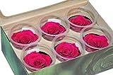Große Stabilisierte Rosen - 6 Stück - Durchmesser 6,5cm - Farbe: Pink - Hochwertige Verarbeitung