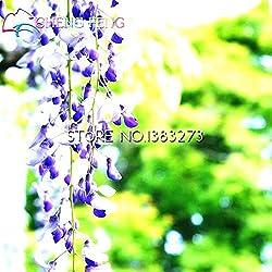 Shopmeeko 10 Stück Glyzinien Pflanzen Schöne Bonsai Für DIY Hausgarten Echte und frische Blumen Pflanzen Glyzinien Sinensis Baum DIY Plant Sement: Pink