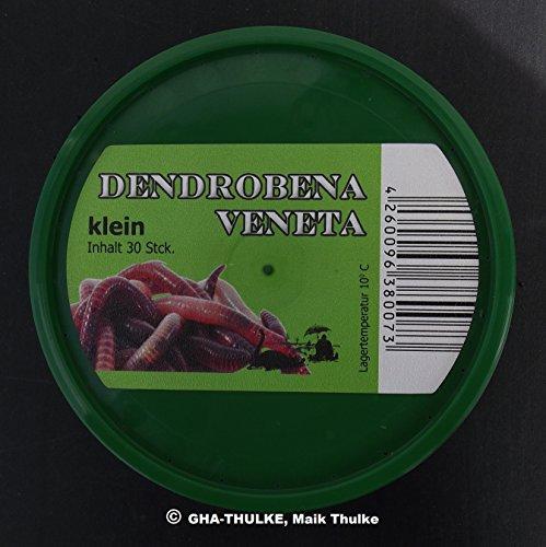 Angelköder : 30 Dendrobena / Rotwurm klein