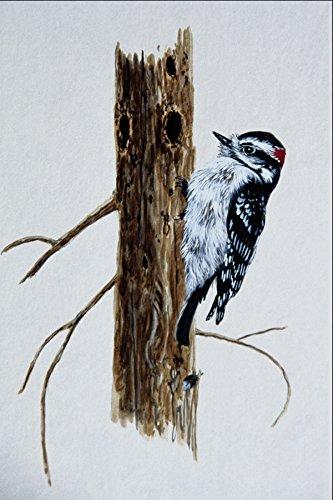 591087-downy-woodpecker-a4-photo-poster-print-10x8