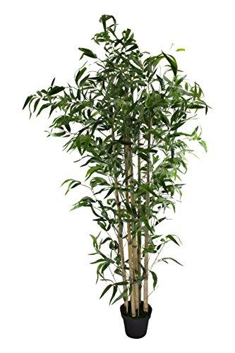 Bambus Baum mit schwarzem Topf