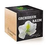 Feel Green Ecocube Orchideenbaum, Blüht Wie Eine Orchidee, Nachhaltige Geschenkidee (100% Eco Friendly), Grow Your Own/Anzuchtset, Pflanzen Im Holzwürfel, Made in Austria