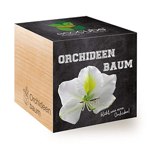 Feel Green Ecocube - Albero per Orchidee, fioritura Come Una Orchidea, Idea Regalo sostenibile (100% Eco Friendly), Grow Your Own/Set per la Coltivazione delle Piante, Prodotto in Austria