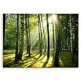 ge Bildet® hochwertiges Leinwandbild XXL Pflanzen Bilder - Wald - Natur Blumen Wald Sonnenschein grün - 100 x 70 cm einteilig 2206 J