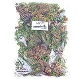 Bonsai-Shopping Sphagnum Moos - Lebend 500 gr. - Grün