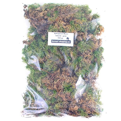 Moss Bonsai (Bonsai-Shopping Sphagnum Moos - Lebend 500 gr. - Grün)