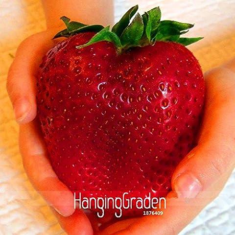 Vendita! Seeds più raro Heirloom Super Gigante Giappone rosso fragola biologica, 100 semi / sacchetto, dolce Juicy Fruit, # WBIXWW