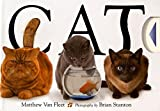 Cat - Best Reviews Guide