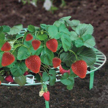 Support fraisier - Lot de 5
