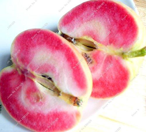 rara-carne-rossa-mela-rossa-frutti-i-semi-di-alberi-da-frutto-puo-essere-piantato-10-pc-pacchetto