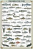 Großes Poster mit Süßwasserfischen, Laminiert, 91,5x61cm