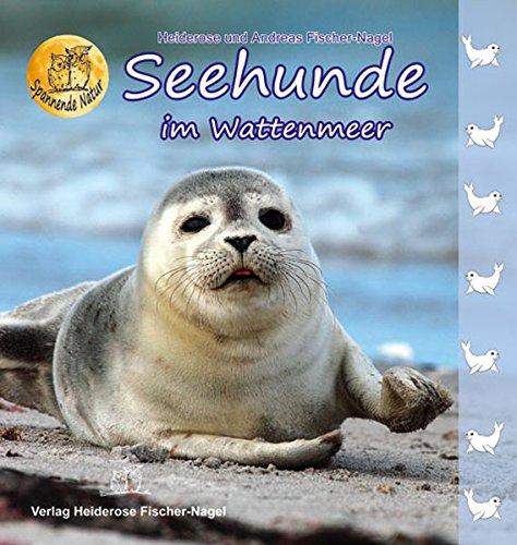 Seehunde im Wattenmeer