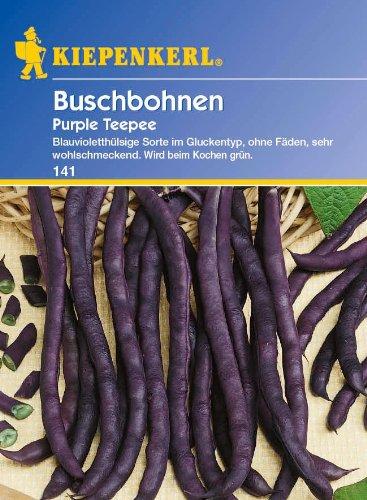 Sperli Gemüsesamen Buschbohnen lila Teepee, grün