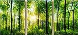 YXQSED Staffelei 3 Bilder[mit Holzrahmen] Malen Nach Zahlen Neuerscheinungen Neuheiten-DIY ölgemälde, Malen Nach Zahlen Kits-der Schmetterlings-Üppiger Baum 16x20inch