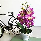 youthny 5Köpfe Künstliche Orchidee Phalaenopsis im Topf, Fake Blumenarrangement Home Dekorationen