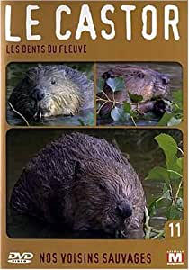 Nos voisins sauvages : Le castor : Les dents du fleuve