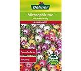Dehner Blumen-Saatgut, Mittagsblume