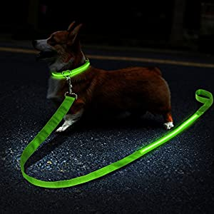 ZeWoo USB Rechargeable LED Dog Safety Collar + LED Dog Lead/Leash - Great Visibility & Improved Safety 15