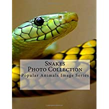 Snakes Photo Collection: Popular Animals Image Series