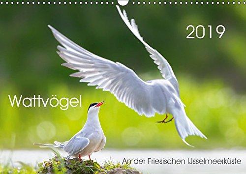 Wattvögel an der Friesischen IJsselmeerküste (Wandkalender 2019 DIN A3 quer): Außergewöhnliche Aufnahmen von Wattvögel oder Limikolen aus ... (Monatskalender, 14 Seiten ) (CALVENDO Tiere)