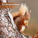 Eichhörnchen 2019, Wandkalender / Broschürenkalender im Hochformat (aufgeklappt 30x60 cm) - Geschenk-Kalender mit Monatskalendarium zum Eintragen