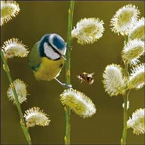 Cartes d'anniversaire/cartes vierges Photograpic RSPB Nichoir pour oiseaux Motif mésange bleue (WDM2972)