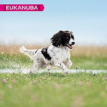 Eukanuba Dog Adult Medium Breed 12