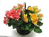 Fash Lady Schlussverkauf!100 Samen/Los MIX Begonia Samen 100% Wahre Malus Spectabilis Samen Topf Begonie Bonsai Pflanze Diy Samen 7