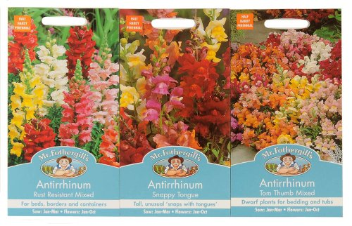 mr-fothergills-seeds-antirrhinum-snapdragon-collection