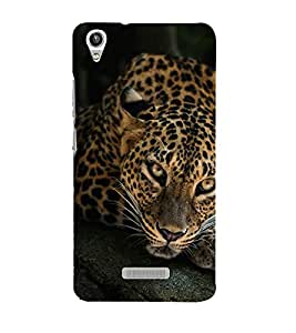 FUSON Leopart Siiting On Tree 3D Hard Polycarbonate Designer Back Case Cover for Lava Pixel V1