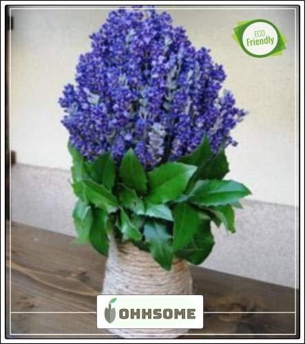geoponics seed s per coltivare - rare semi di lavanda - fragrance leggendario per ogni giardino kitchen garden pacchetto dei semi (20 per pacchetto)