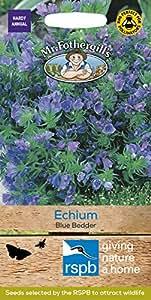Mr. Fothergill's 15848 Paquet de 200 graines de Vipérine commune Bleu