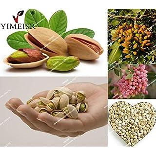 Go Garden Nut Tree Pistachios Seeds Pistacia Rare Fruit Tree Seeds Tropical Plant Nut Seed
