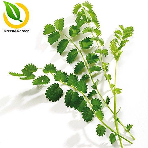 mini-graines bonsaï myrtille 200pc, fruit délicieux, hautes graines de fruits nutritionnels de l'enfant