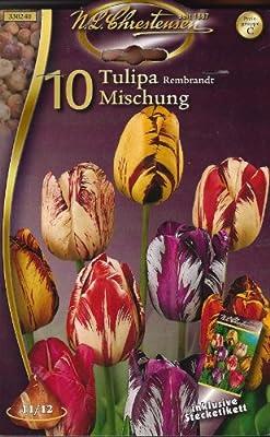 Rembrandt Tulpen Mischung (10) von Chrestensen auf Du und dein Garten