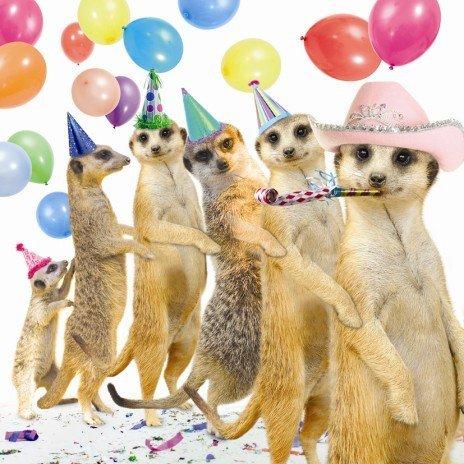 Image of Conga Meerkats Birthday Card