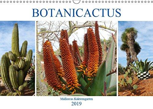 BOTANICACTUS Mallorcas Kakteengarten (Wandkalender 2019 DIN A3 quer): Ein Januar-Spaziergang durch den mallorquinischen Kakteengarten (Monatskalender, 14 Seiten ) (CALVENDO Natur)