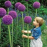 PlenTree 100Pcs Esotici Semi fiori cipolla Vasi Fioriere abbellire il cortile Mobili Piante Ornamentali di trasporto
