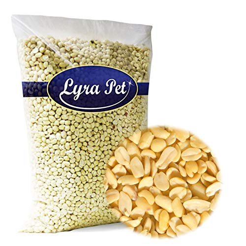 Lyra Pet 20 kg