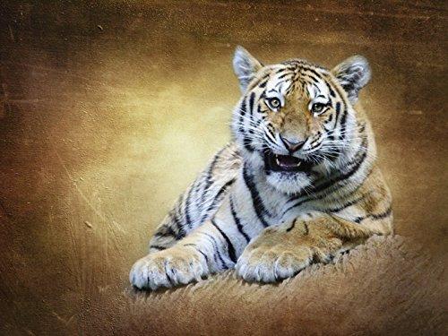 Artland Poster oder Leinwand-Bild fertig aufgespannt auf Keilrahmen mit Motiv Heike Hultsch Raubkatze Tiere Wildtiere Raubkatze Mixed Media Braun C3UK