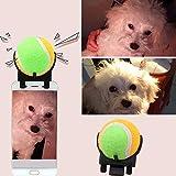 Lorenlli Portable Pet Selfie Stick Ball Pet Dog Tennis Ball Attachment Cat Cat Scattare Foto Giocattolo di addestramento Pet Supplies