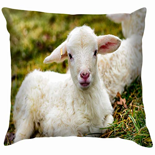 Barbados Sofa (vintage cap Twin Winter Lambs Katahdin Barbados Blackbelly Animals Wildlife Agriculture Parks Outdoor Throw Pillows Covers Accent Home Sofa Cushion Cover Pillowcase Gift Decorative 18X18 Inch)