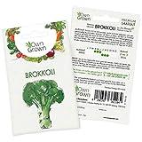 OwnGrown Premium Gemüse Samen, Gemüsesamen Saatgut