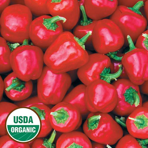 Hungarian miniature red pepper, SWEET, 10 semi