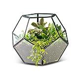 Mini Gewächshaus Glasterrarium für Pflanzen