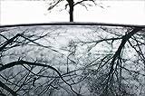 Kunstdruck/Poster: Huib Limberg Tree-Reflection # 02