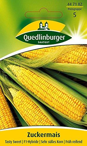 Maissamen – Zuckermais Tasty Sweet F1-Hybride von Quedlinburger Saatgut