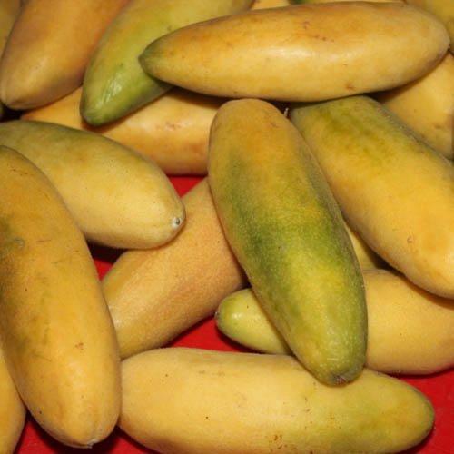 Plant World Seeds - Banana Passion Fruit Seeds